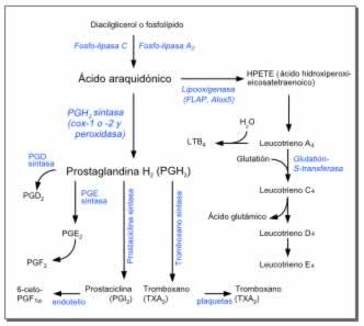 Biosíntesis de prostaglandinas